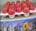 [청송우가네사과] (특)청송부사 8kg(24과)