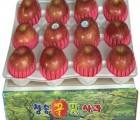 [청송꿀맛사과] [선물용] IPM사과 부사 4kg (10 - 13과)