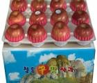 [청송꿀맛사과] IPM사과 부사 8kg (20 - 24과)