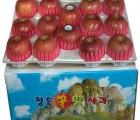 [청송꿀맛사과] IPM사과 부사 8kg (25 - 30과)