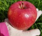 [터골댁] 부사 사과 6kg 가정용 26과 내