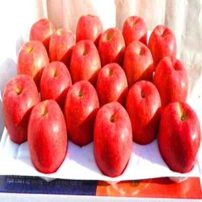 [청송솔뫼농원] ★GAP인증 이력추적관리상품★ 껍질째먹는사과부사8kg (36~38과)