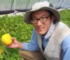[우수농산물GAP/친환경 인증] 참외가정용 B품 10kg