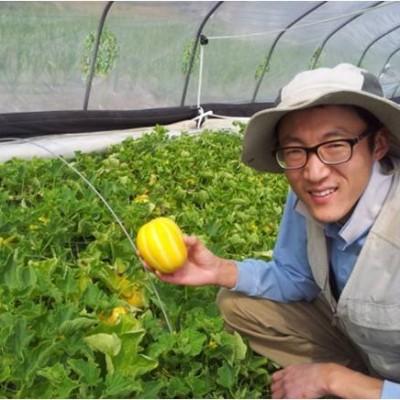 [참살이노란사탕참외농원] [우수농산물GAP] 가정용C등외품5kg
