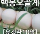 [농부야] 백봉 오골계 방사 유정란10알[사과 유정란 배 오징어 땅콩 계란 부사]