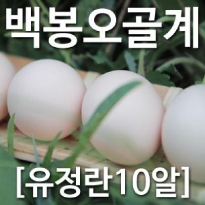 [농부야] 백봉 오골계 방사 유정란10알[유정란 계란]