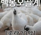 [농부야] 백봉 오골계 종란(부화용)20알[유정란 계란]