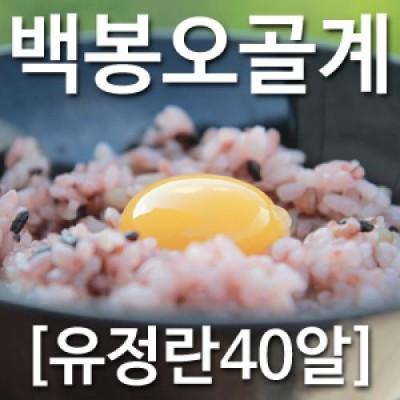 [농부야] 백봉 오골계 방사 유정란40알[사과 유정란 배 오징어 땅콩 계란 부사]