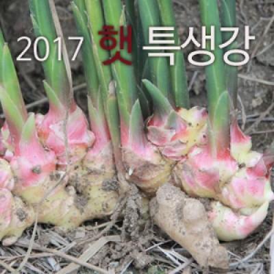 [농부야] 2017 햇 특 생강 1kg [사과 양광 배 감홍]