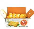 [성주노란참외농장] 노란참외농장(10kg)특품