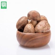 [광명협동조합] 무농약 백송고버섯 1kg