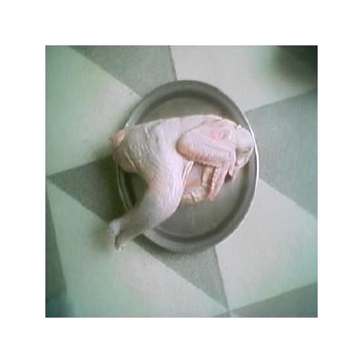 [삼봉산 양지 자연농원]  자연 방사 토종닭 (수닭 1마리)