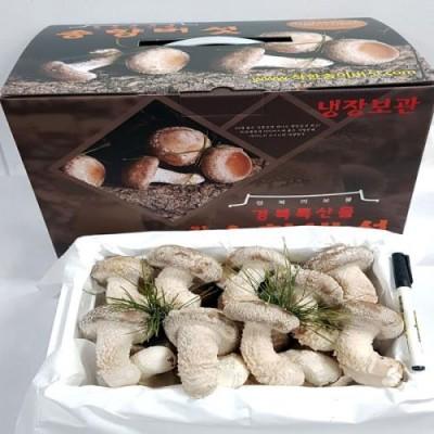 [착한송이버섯]착한송이 송향버섯 고급형(선물용)1kg 무농약