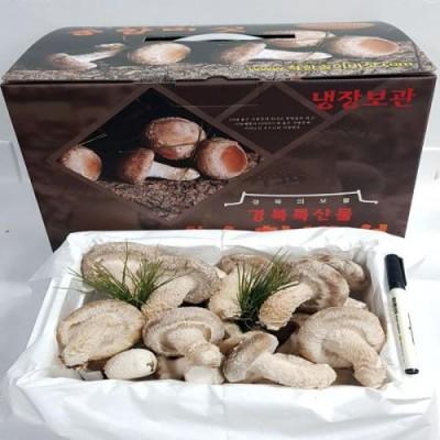 착한송이 송향버섯 실속형1kg 무농약100%