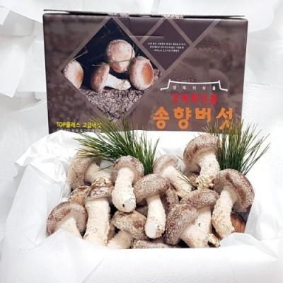 [착한송이버섯]착한송이송향버섯 선물용500g