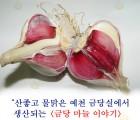 [예천군]금당마늘[3.5kg, 특, 지름 4.5~5cm, 100개]