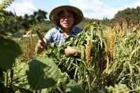 쌀아지매 농가 이미지